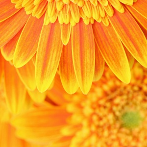 big-yellow-flower-background.jpg
